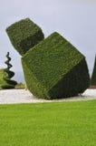 Ornamentacyjna roślina z przycinać artystyczny Zdjęcie Stock
