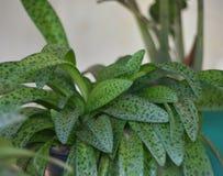 Ornamentacyjne rośliny Zdjęcia Royalty Free