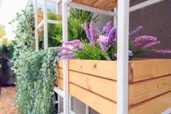 Ornamentacyjne rośliny w garnku na drewnianym pudełku w stalowej półce zdjęcie royalty free