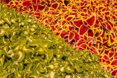 Ornamentacyjne rośliny Obrazy Stock