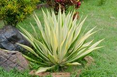 Ornamentacyjne rośliny Fotografia Royalty Free