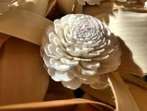 Ornamentacyjne rośliny w centrum handlowym Obraz Royalty Free