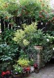 Ornamentacyjne rośliny w garnkach dla ciemniutkiego Zdjęcie Royalty Free