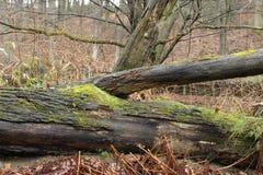 Ornamentacyjnego ogródu drzew staw i kamienie Zdjęcia Royalty Free