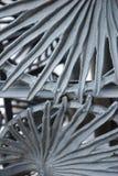 Ornamentacyjni liście Zdjęcie Stock