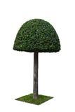 ornamentacyjny drzewo Obrazy Royalty Free