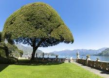 Ornamentacyjny drzewo na tarasie Zdjęcie Royalty Free