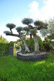 Ornamentacyjny drzewo oliwne Obrazy Royalty Free