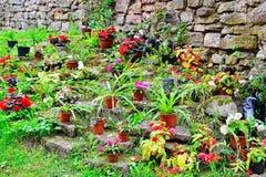 Ornamentacyjny kwiatu dorośnięcie w garnkach na Alpejskim wzgórzu przy sto Obraz Stock