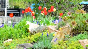Ornamentacyjny Ogród zbiory wideo