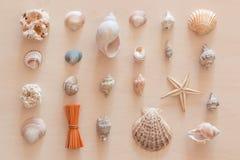 Ornamentacyjny skład robić od seashells i shellfishes Fotografia Stock