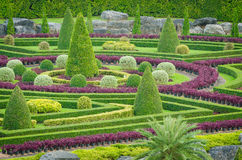 Ornamentacyjnych rośliien Drzewny Tropikalny krajobraz w natura ogródzie Zdjęcie Royalty Free