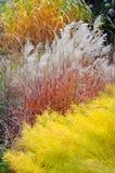 ornamental травы Стоковая Фотография RF