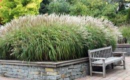 засевает ornamental травой Стоковое Изображение RF