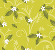 Ornamental background with white flowers Royalty Free Stock Images
