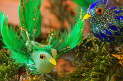 Ornamental bird Stock Images