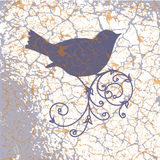 Ornamental bird on grunge background Stock Photos