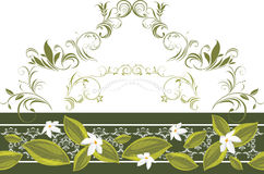 Ornamental border a with white blooming flowers Stock Photography