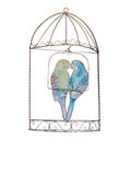 Ornamental Budgies in a Cage Stock Photos