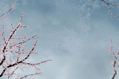Ornamental cherry tree on textured backgro Stock Image