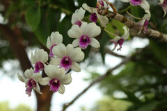 Ornamental with colorful orchids in the garden. Royalty Free Stock Photo