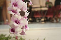 Ornamental with colorful orchids in the garden. Stock Photo