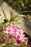 Ornamental with colorful orchids in the garden. Royalty Free Stock Photography