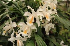 Ornamental com as orquídeas coloridas no jardim fotografia de stock