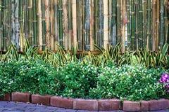 Ornamental com cerca de bambu imagens de stock royalty free