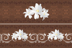 Ornamental dark brown borders with white tulips Stock Photos