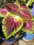 Ornamental Decor Plants Stock Photos