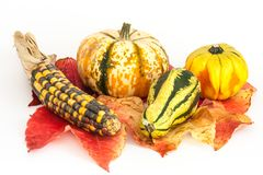 Ornamental or decorative gourd Stock Photography