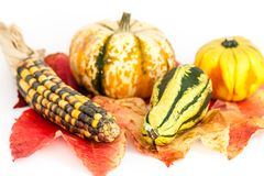 Ornamental or decorative gourd Royalty Free Stock Photo