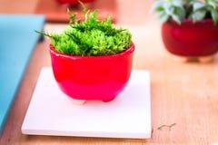 ornamental Dekoracyjna trawa w flowerpot chorvonomu garnek dekoracyjny dekoruje wnętrze Fotografia Royalty Free