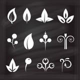 Ornamental design floral elements set on a chalkboard background Royalty Free Stock Image