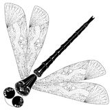 Ornamental dragonfly Stock Photos
