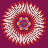 Seed inside spring mandala Royalty Free Stock Photos