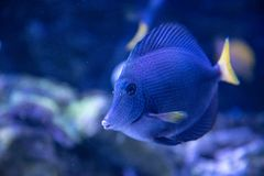 Ornamental Fish Tropical Fish Butterfly Fish stock photos