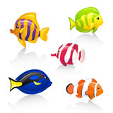 Ornamental fishes Royalty Free Stock Photo