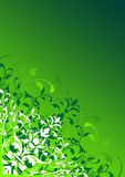 Ornamental floral design. An ornamental floral design in green Stock Images