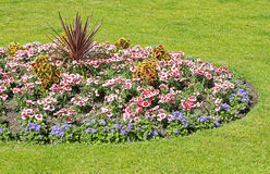 Ornamental flower bed Stock Photo