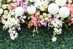 Ornamental flower droops Royalty Free Stock Photos