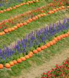 Ornamental flower garden with pumpkin Stock Photos