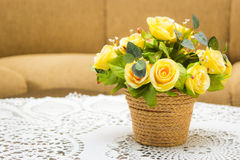 Ornamental flower. In a pot at Living rooms Stock Image