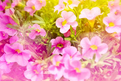 Ornamental flower Royalty Free Stock Image