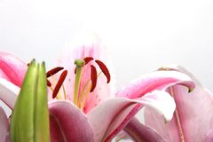 Ornamental flowers Stock Photos