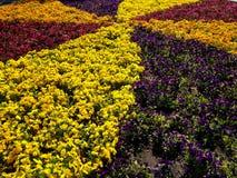 Ornamental flowers Stock Photo