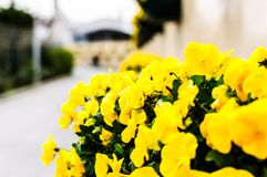 Ornamental Flowers In Entrance Of Ataturk`s Moving Kiosk stock photography