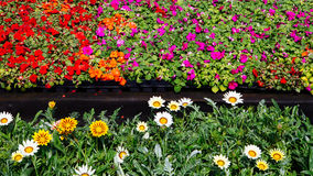 Ornamental flowers on sale Royalty Free Stock Image