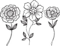 Ornamental Flowers Vector Illustration Royalty Free Stock Photos